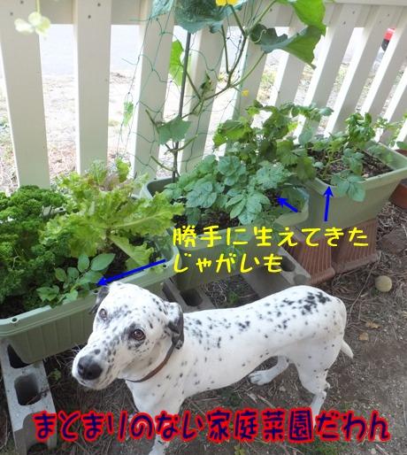 blog_0525_190148.jpg