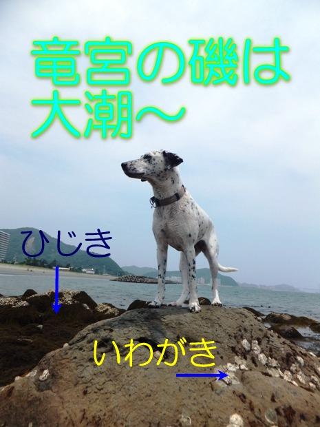 blog_0614_122306.jpg