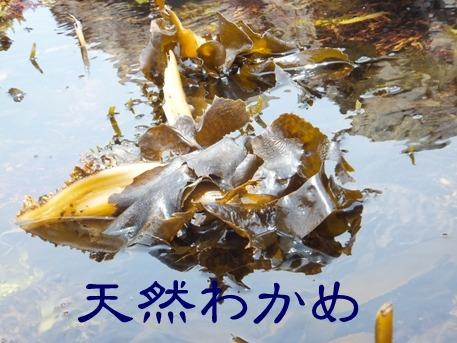blog_0614_125000.jpg