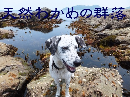 blog_0614_125413.jpg