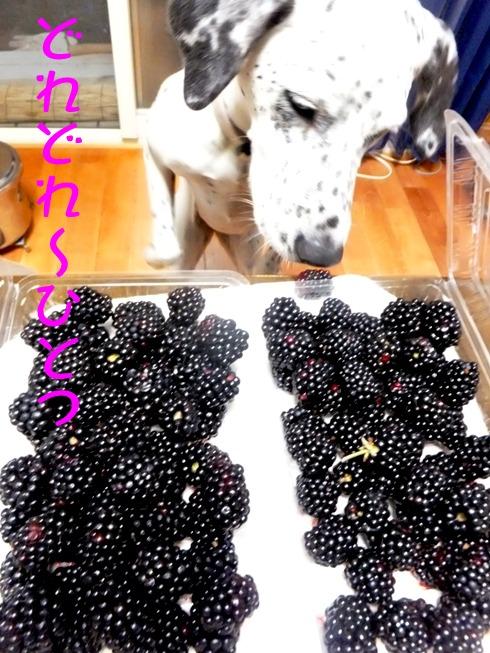 blog_0707_194458.jpg