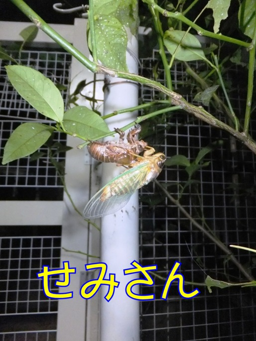 blog_0802_161104.jpg