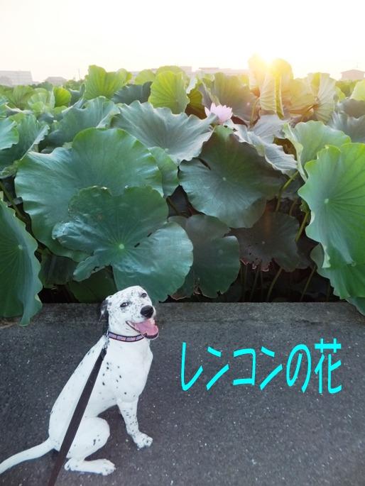 blog_0802_161126.jpg