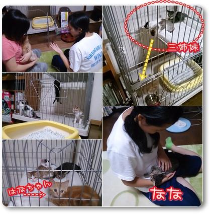 cats_20140816210943367.jpg
