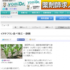 静岡県は9日、御殿場保健所管内(御殿場市、小山町)に住む70歳代の男性が、ユリ科の有毒植物「イヌサフラン」を食べて食中毒症状を訴えた末に死亡したと発表した。 葉の形がよく似た山菜のギョウジャニンニクと間違え、他の野菜と一緒に煮物にして食べたとされる。県内でイヌサフランによる食中毒は初めて。 県衛生課と御殿場署によると、男性は5日午前1時頃、胃痛や吐き気を訴えて入院し、9日に多臓器不全などで死亡した。原因は、4日の夕飯で食べたイヌサフランのつぼみが入った煮物による食中毒と特定された。家族も同じ煮物を食べたが、途中で苦みを感じてやめたという。 イヌサフランは、男性が自宅の畑で栽培したものだった。ギョウジャニンニクだと思って育てていたとみられるが、入手の経緯は分かっていない。 同課によると、イヌサフランは葉や花、球根など全体に有毒成分の「コルヒチン」を含んでいる。摂取すると吐き気や下痢を起こし、呼吸困難に陥ることもある。 イヌサフランによる食中毒は、北海道などで複数の前例があり、死者も出ている。同課は「有毒植物は山菜に交じって生えていることがある。山菜採りをする時は、1本1本確認して欲しい」と呼びかけている。