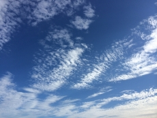 立秋の途端に鱗雲。空は確実に季節を映してる