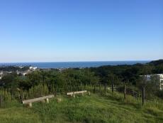 今日は青が濃い。空は白っぽい。#海 #海photo