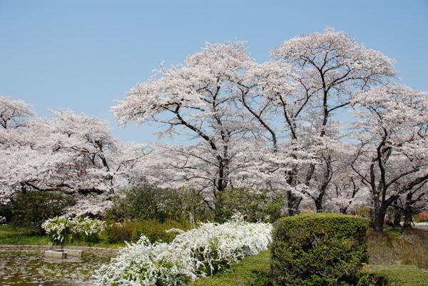 D京都府立植物園yy#02