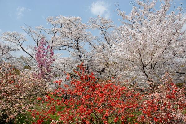D京都府立植物園yy#04