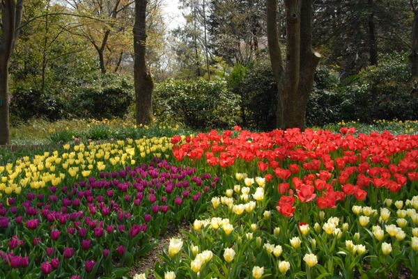 D京都府立植物園yy#08