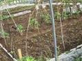 菜園6-12