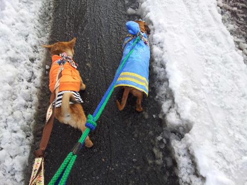 雪の散歩道12