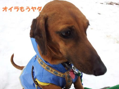 雪の散歩コース8