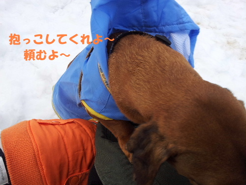 雪の散歩コース9