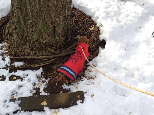 雪の散歩コース2