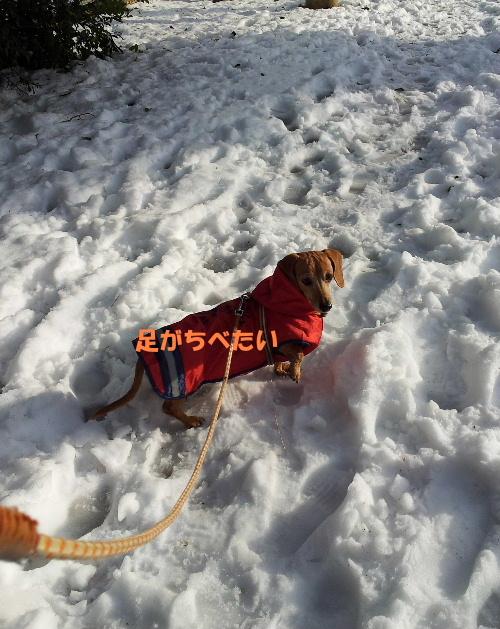 雪の散歩道4