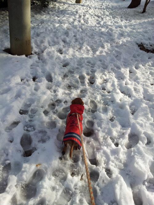 雪の散歩コース