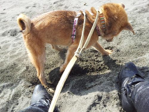 海で遊ぶハム太