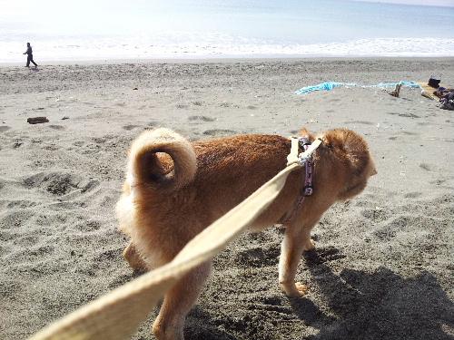海で遊ぶハム太2