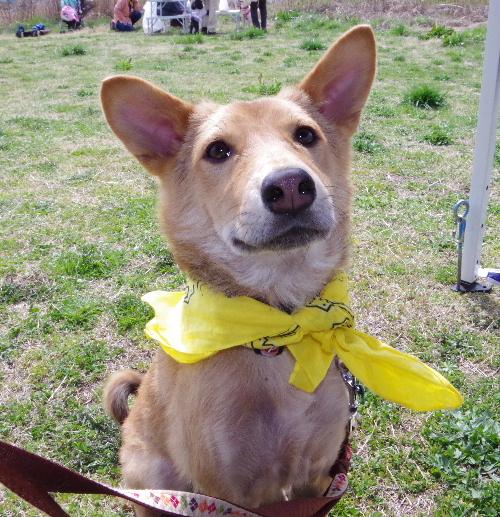 臨時犬親会のハム2
