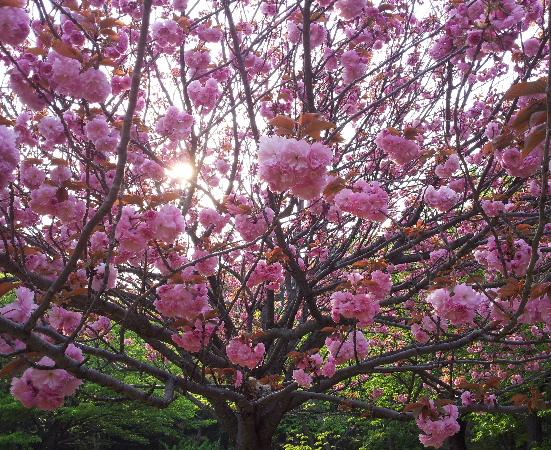 梅の花?2