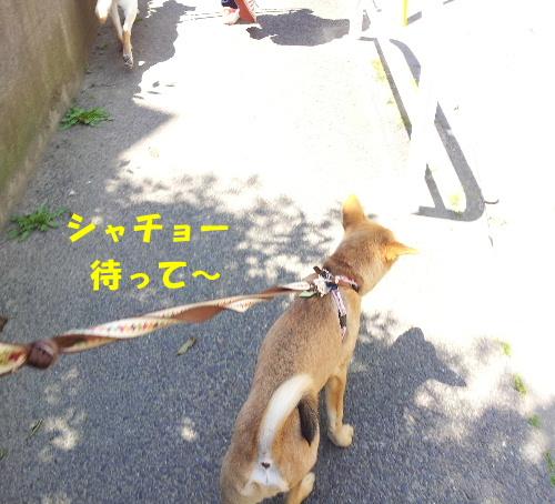 品川犬親会参加ハム太8