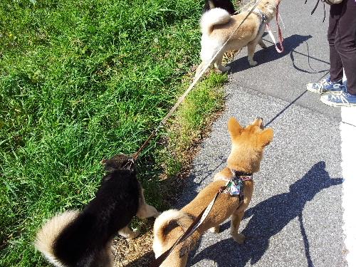 お散歩に同行11