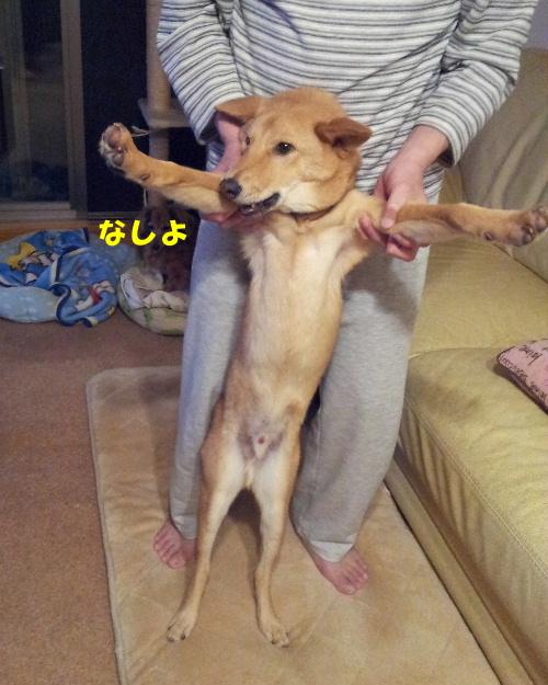 犬親会へ2