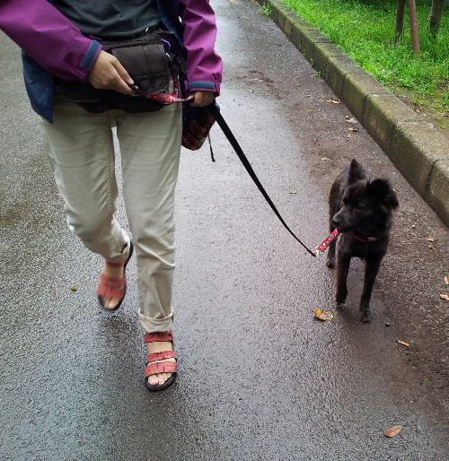 マヤちゃんと散歩