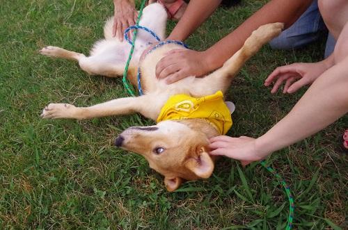 定例犬親会8月5