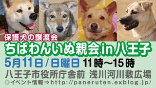 hachiouji20140511_320x180.jpg