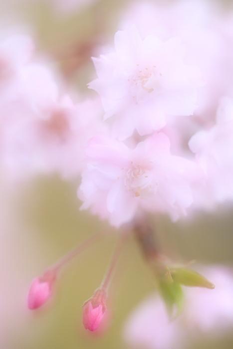 2014_0412_35.jpg