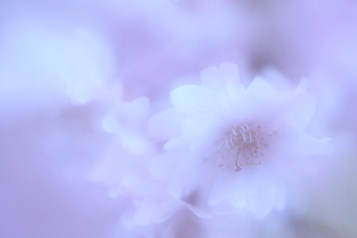 2014_0412_38.jpg