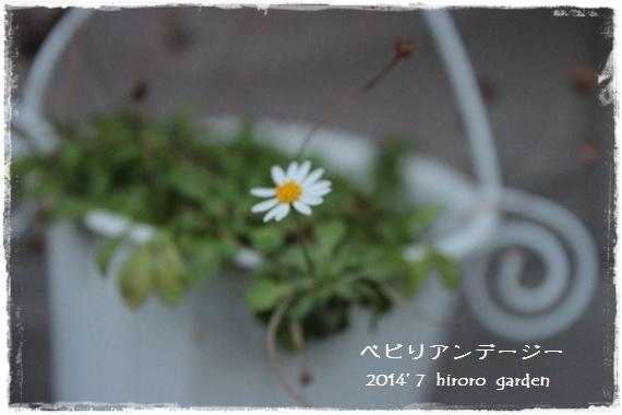 11IMG_204511.jpg