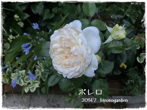CIMG187911.jpg