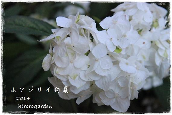 IMG_102711.jpg