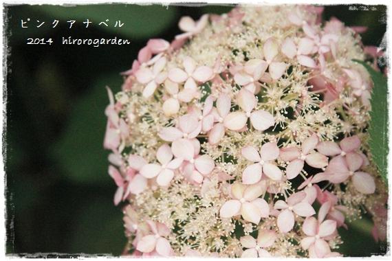 IMG_117711.jpg