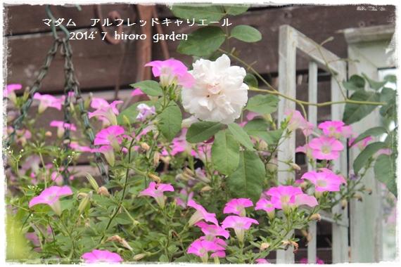 IMG_208011.jpg
