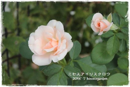 IMG_218511.jpg
