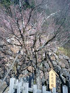 武田神社 (8)