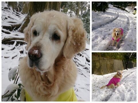 140213雪雪雪