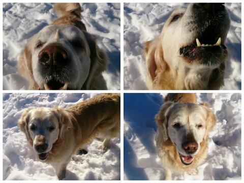 PicsArt_1392542784961雪とジュティー