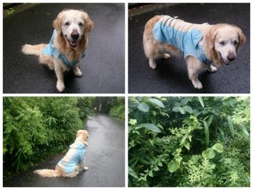 140704雨の散歩Juty