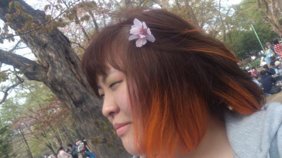 桜山形(縮小済)