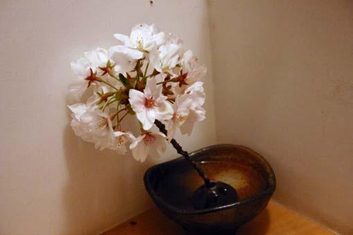 IMG_9597sakura1.jpg