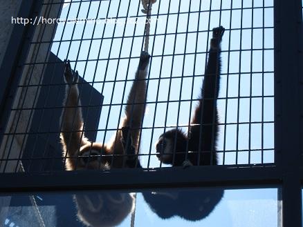 0711旭山動物園25