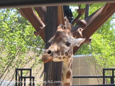 0711旭山動物園28