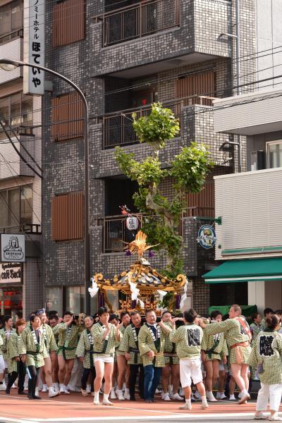 三社祭 2014 山谷周辺 ⑤