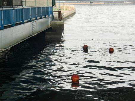 水面に浮かぶ三個のブイ