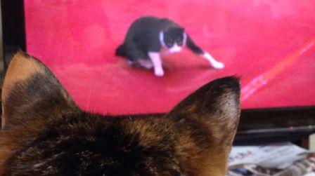 ヘンなポーズの猫